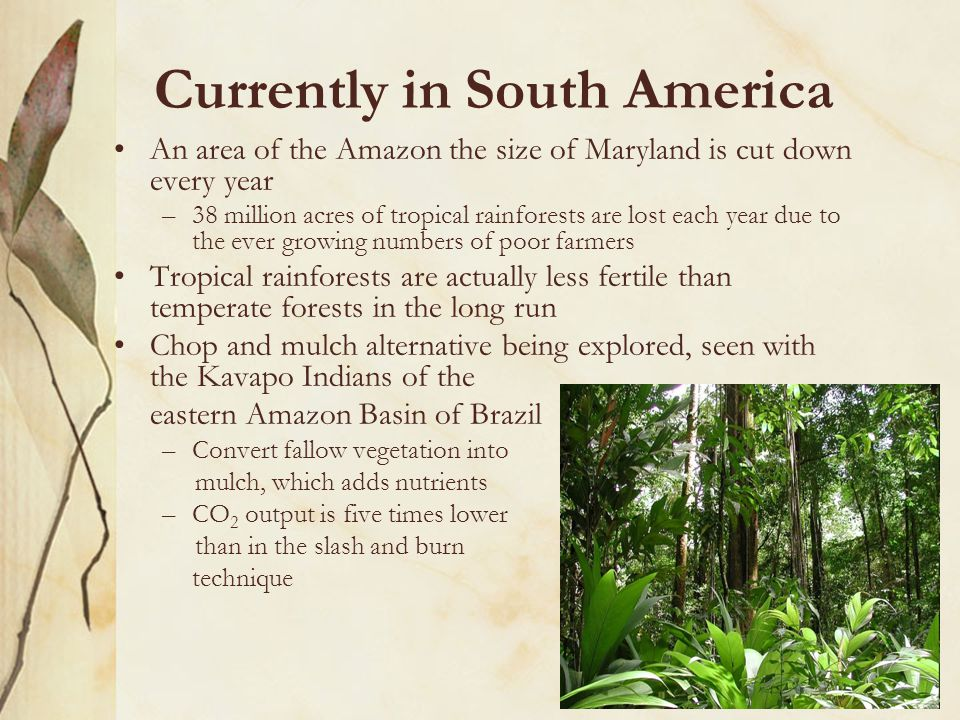 Currently in South America An area of the Amazon the size of Maryland is cut down every year –38 million acres of tropical rainforests are lost each year due to the ever growing numbers of poor farmers Tropical rainforests are actually less fertile than temperate forests in the long run Chop and mulch alternative being explored, seen with the Kavapo Indians of the eastern Amazon Basin of Brazil –Convert fallow vegetation into mulch, which adds nutrients –CO 2 output is five times lower than in the slash and burn technique