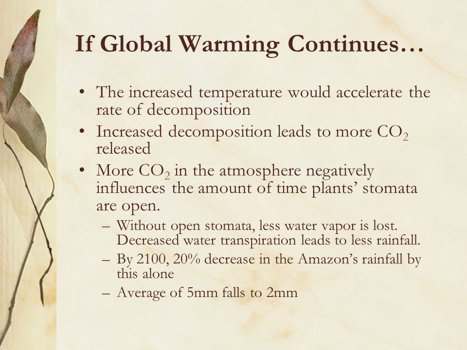 If Global Warming Continues… The increased temperature would accelerate the rate of decomposition Increased decomposition leads to more CO 2 released More CO 2 in the atmosphere negatively influences the amount of time plants' stomata are open.