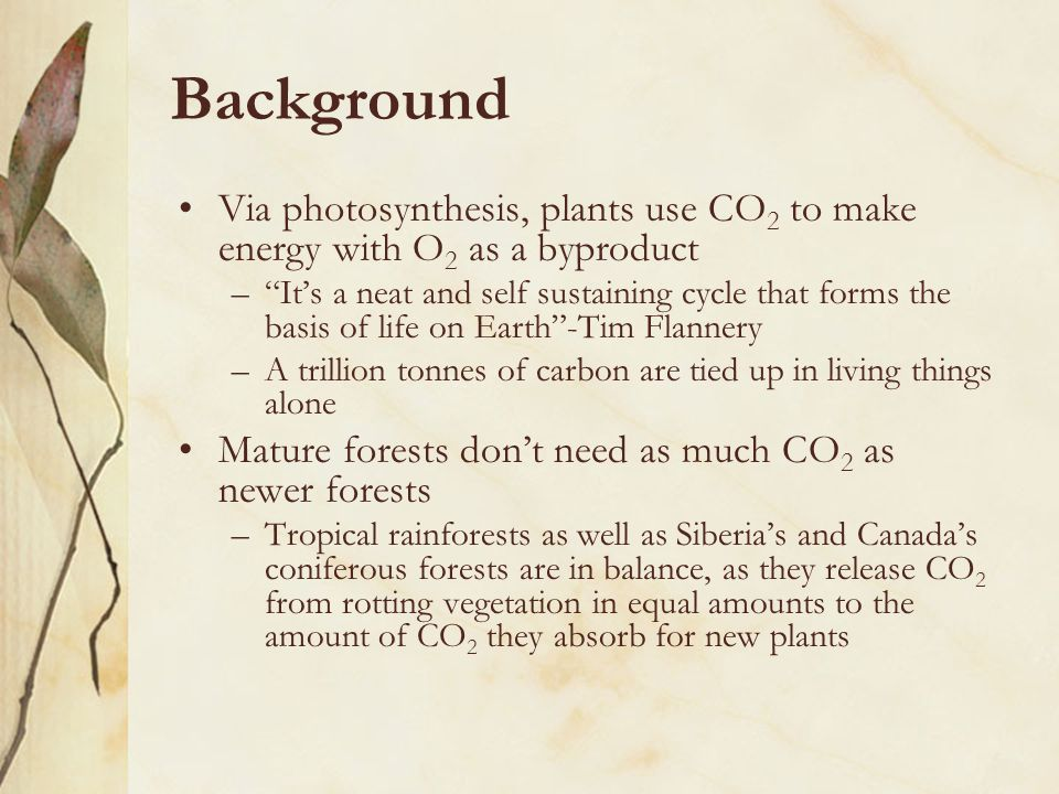Background Via photosynthesis, plants use CO 2 to make energy with O 2 as a byproduct – It's a neat and self sustaining cycle that forms the basis of life on Earth -Tim Flannery –A trillion tonnes of carbon are tied up in living things alone Mature forests don't need as much CO 2 as newer forests –Tropical rainforests as well as Siberia's and Canada's coniferous forests are in balance, as they release CO 2 from rotting vegetation in equal amounts to the amount of CO 2 they absorb for new plants