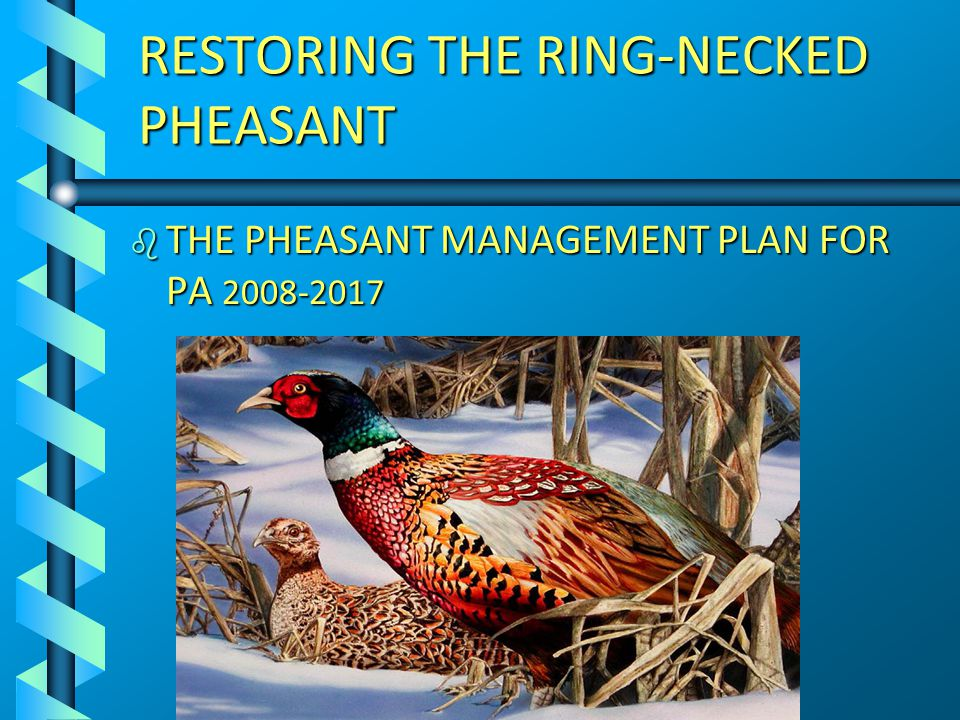 RESTORING THE RING-NECKED PHEASANT b THE PHEASANT MANAGEMENT PLAN FOR PA 2008-2017