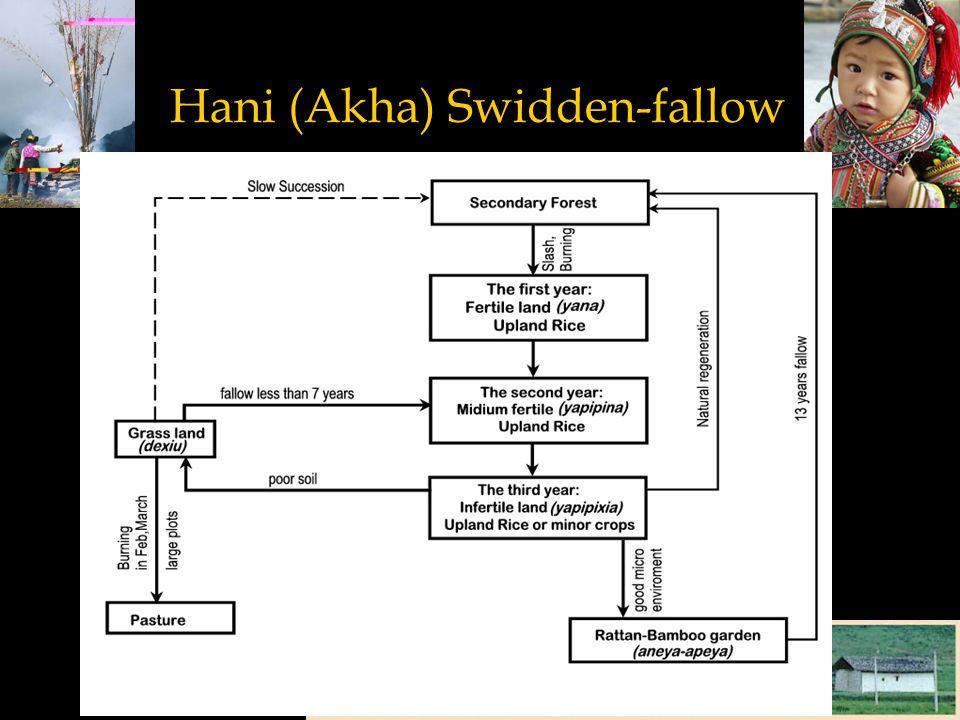 Hani (Akha) Swidden-fallow