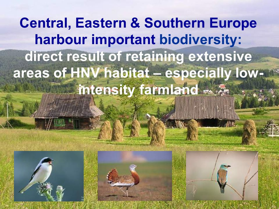 Central, Eastern & Southern Europe harbour important biodiversity: direct result of retaining extensive areas of HNV habitat – especially low- intensity farmland