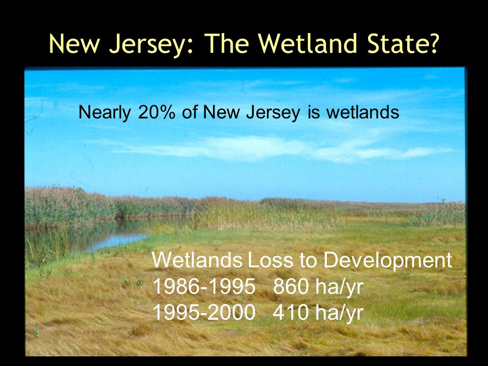 New Jersey: The Wetland State.