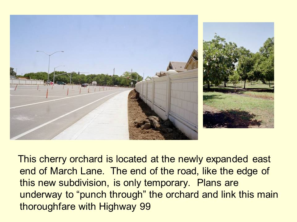 This cherry orchard is located at the newly expanded east end of March Lane.