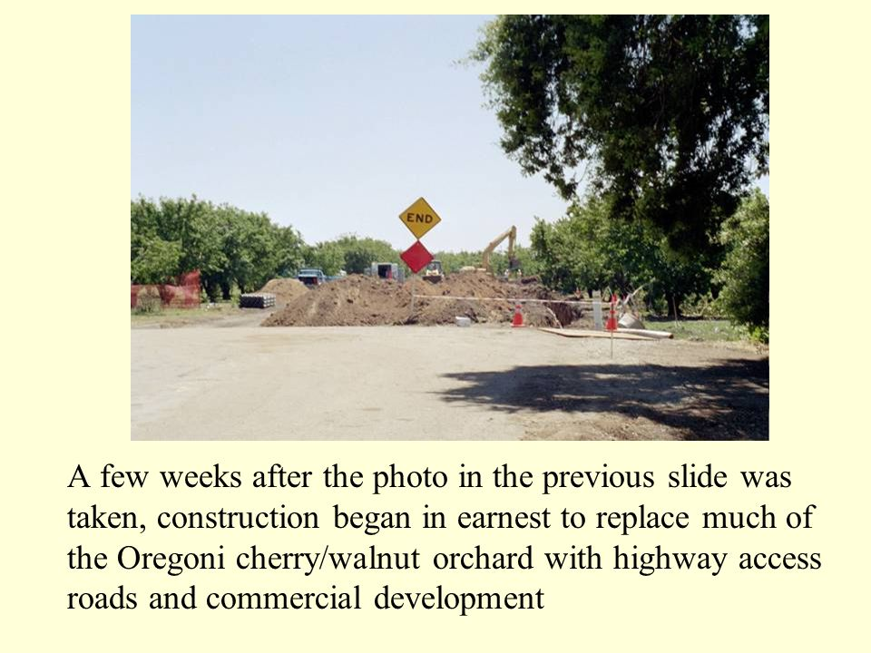 A few weeks after the photo in the previous slide was taken, construction began in earnest to replace much of the Oregoni cherry/walnut orchard with highway access roads and commercial development