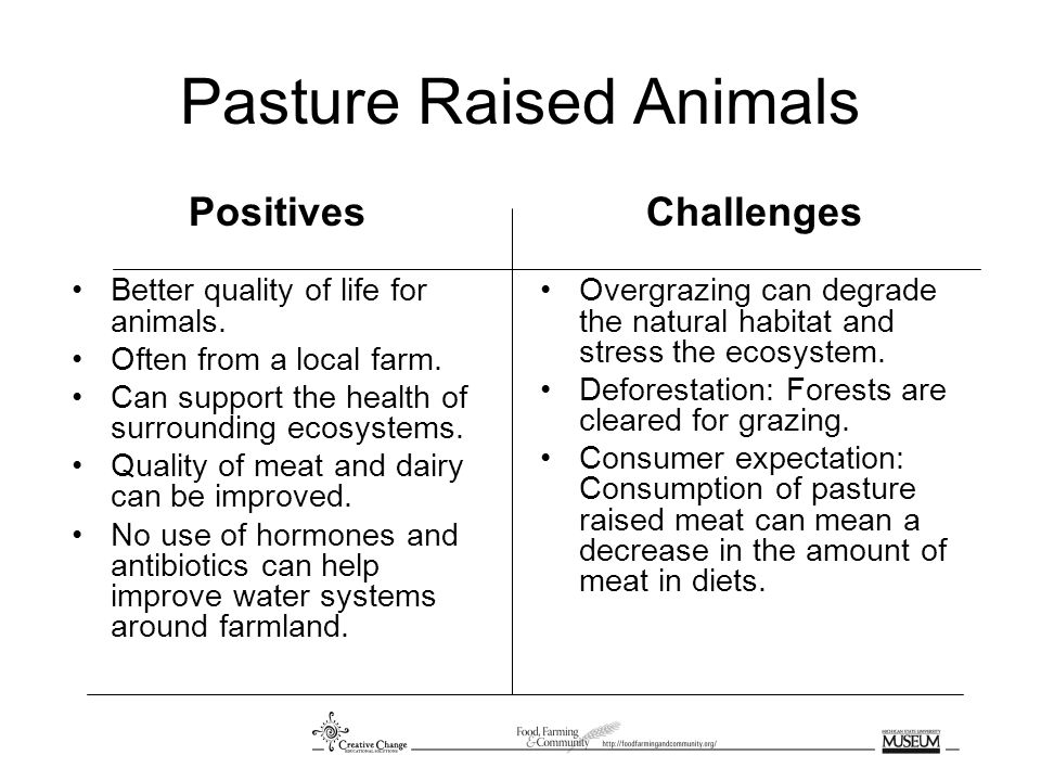 Pasture Raised Animals Positives Better quality of life for animals.