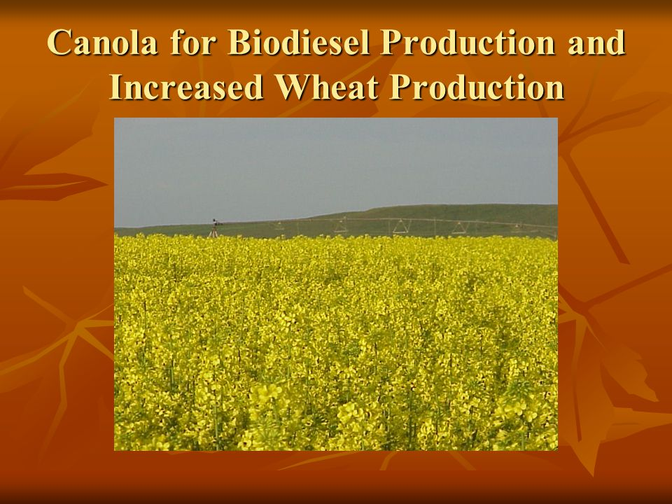 Canola for Biodiesel Production and Increased Wheat Production