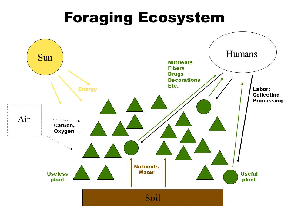 Soil Nutrients Water Sun Air Energy Carbon, Oxygen Humans Labor: Collecting Processing Useful plant Useless plant Foraging Ecosystem Nutrients Fibers
