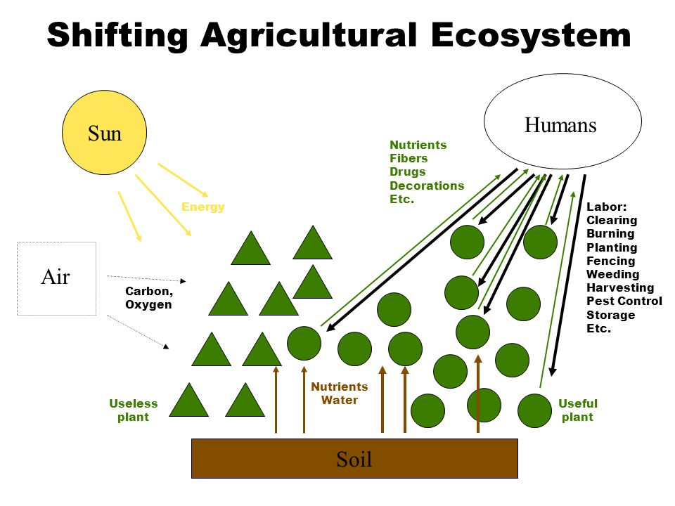 Soil Nutrients Water Sun Air Energy Carbon, Oxygen Humans Labor: Clearing Burning Planting Fencing Weeding Harvesting Pest Control Storage Etc. Useful