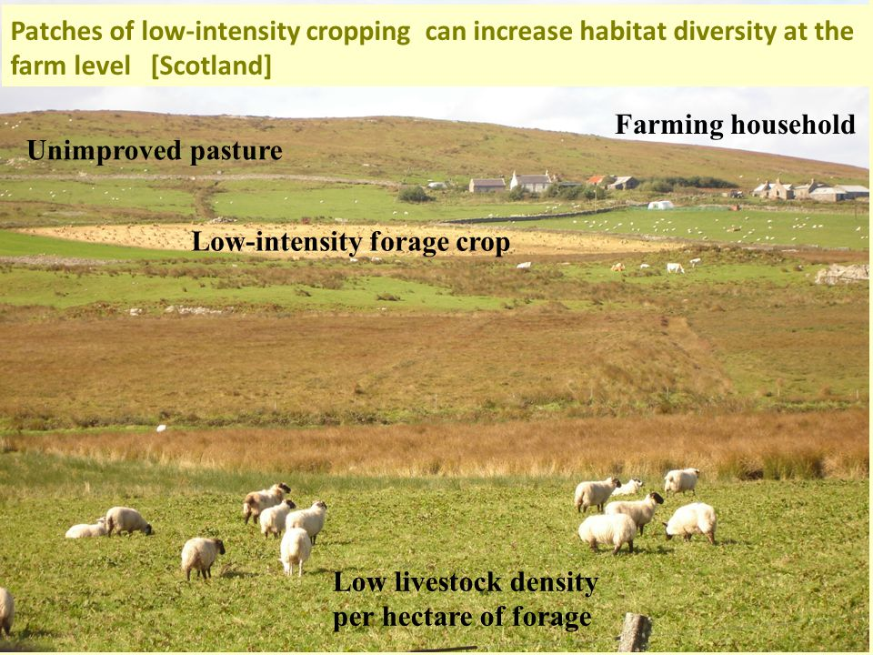 Low-intensity forage crop Low livestock density per hectare of forage Unimproved pasture Farming household Patches of low-intensity cropping can increase habitat diversity at the farm level [Scotland]