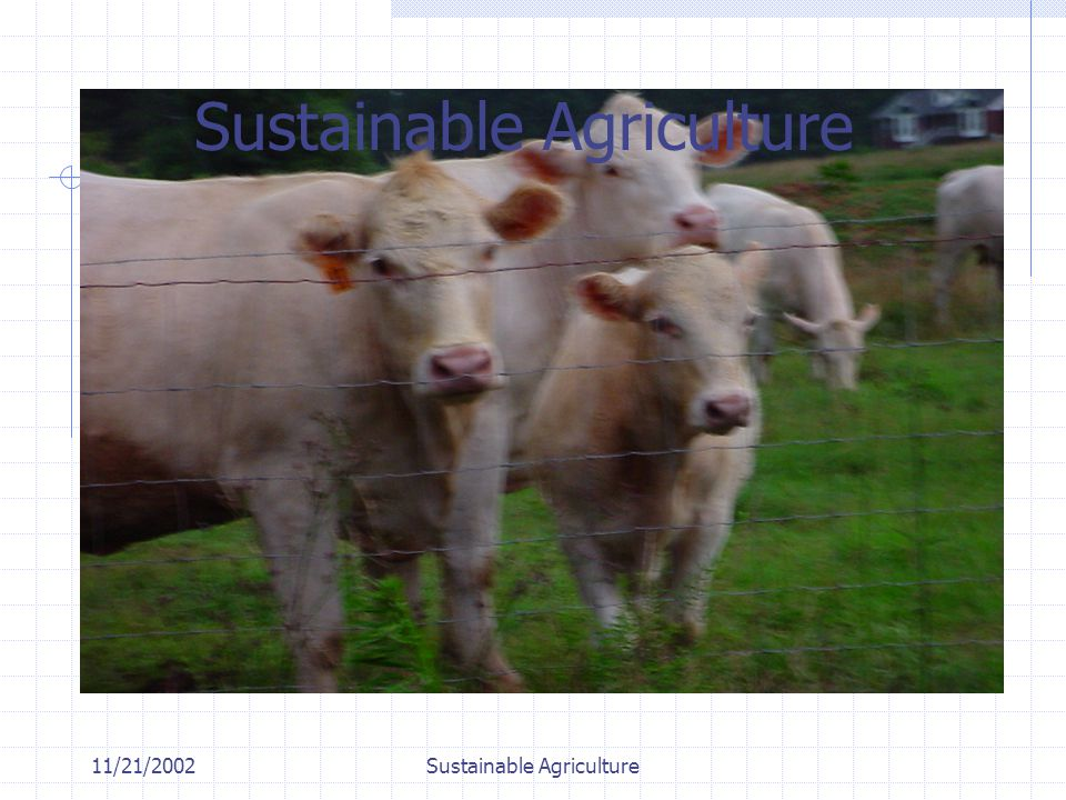 11/21/2002Sustainable Agriculture Opportunity Lost Eco Tourism Heritage Trails MicroFarm Enterprises Anything other than Impervious Surfaces