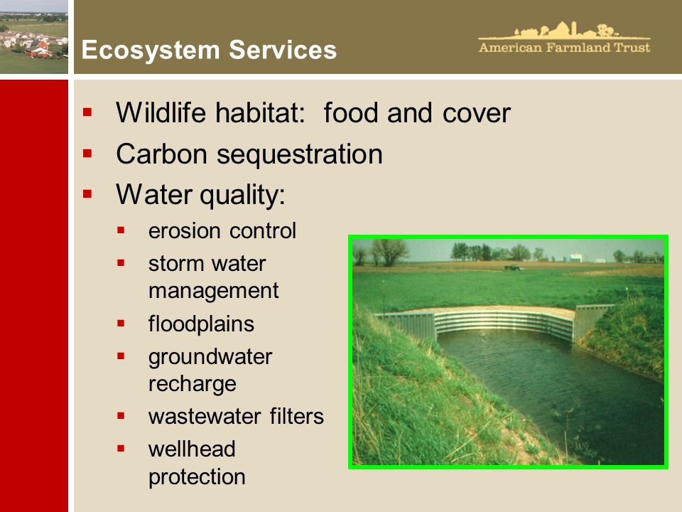 Ecosystem Services  Wildlife habitat: food and cover  Carbon sequestration  Water quality:  erosion control  storm water management  floodplains  groundwater recharge  wastewater filters  wellhead protection
