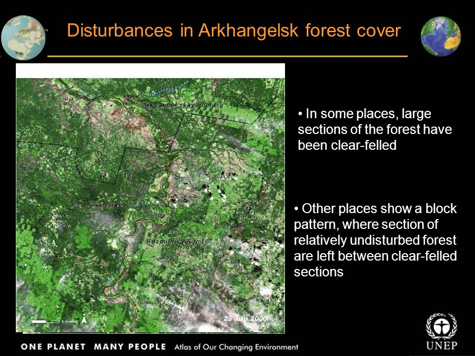 Disturbances in Arkhangelsk forest cover In some places, large sections of the forest have been clear-felled Other places show a block pattern, where section of relatively undisturbed forest are left between clear-felled sections