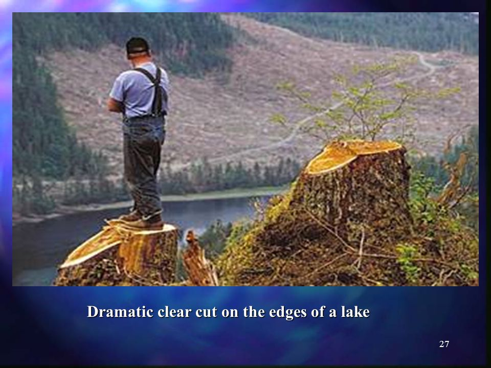 27 Dramatic clear cut on the edges of a lake