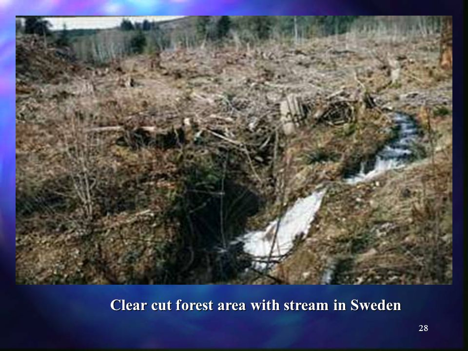 28 Clear cut forest area with stream in Sweden