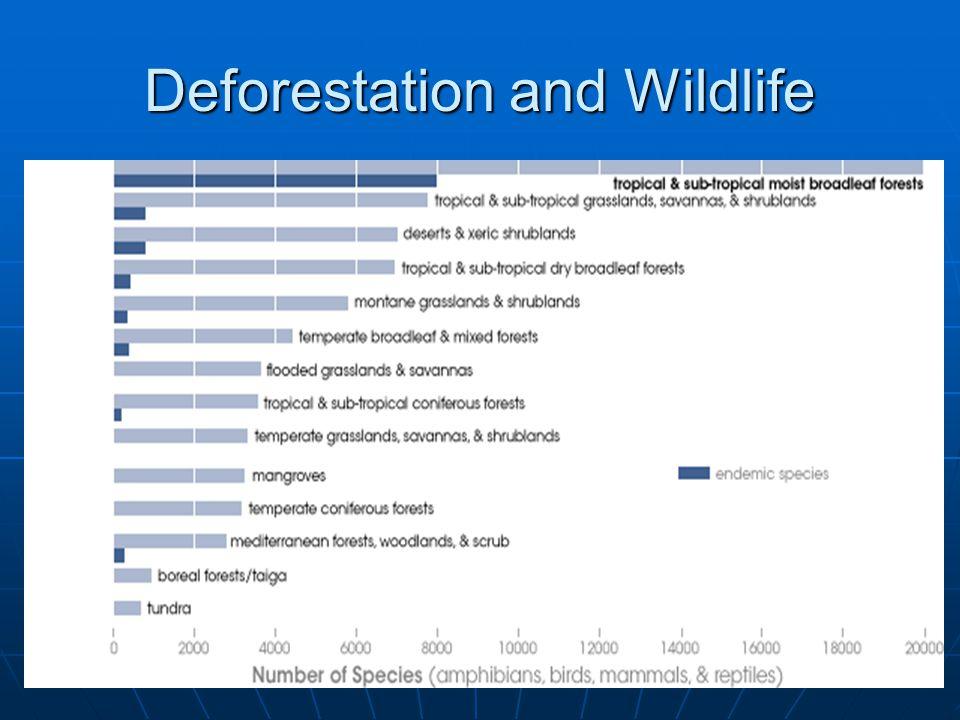 Deforestation and Wildlife