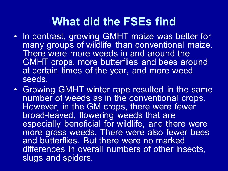What did the FSEs find In contrast, growing GMHT maize was better for many groups of wildlife than conventional maize. There were more weeds in and ar