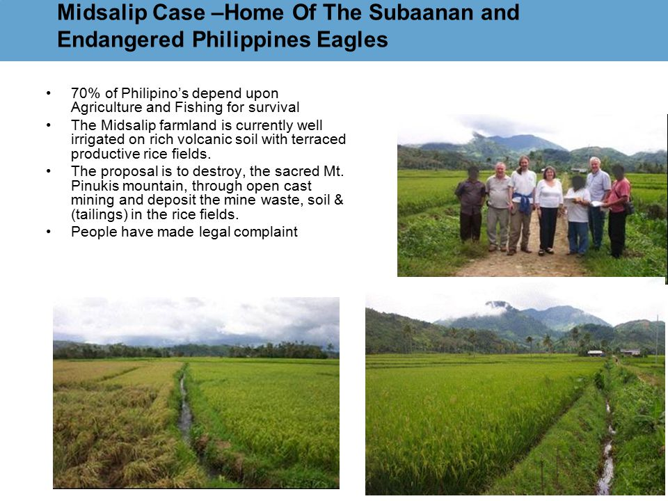 Midsalip Case –Home Of The Subaanan and Endangered Philippines Eagles 70% of Philipino's depend upon Agriculture and Fishing for survival The Midsalip farmland is currently well irrigated on rich volcanic soil with terraced productive rice fields.