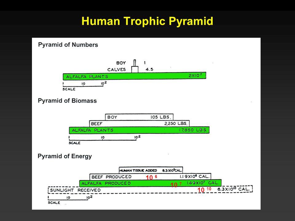 Human Trophic Pyramid 10 10 7 10 6