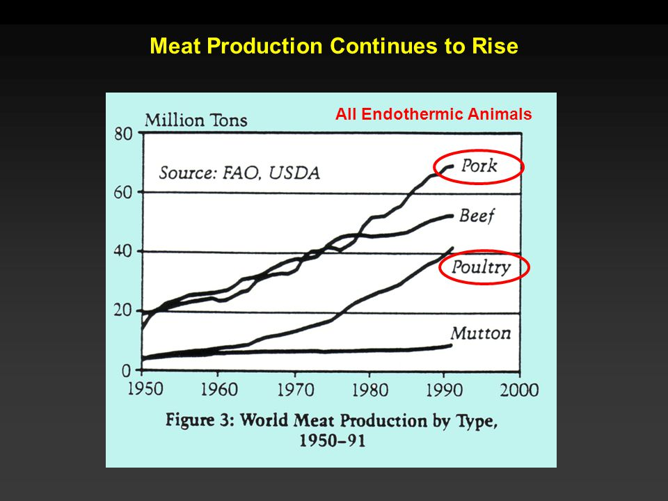 Meat Production Continues to Rise All Endothermic Animals