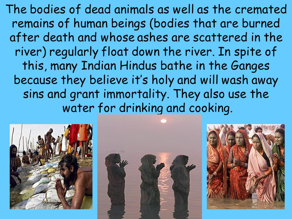24 The bodies of dead animals as well as the cremated remains of human beings (bodies that are burned after death and whose ashes are scattered in the
