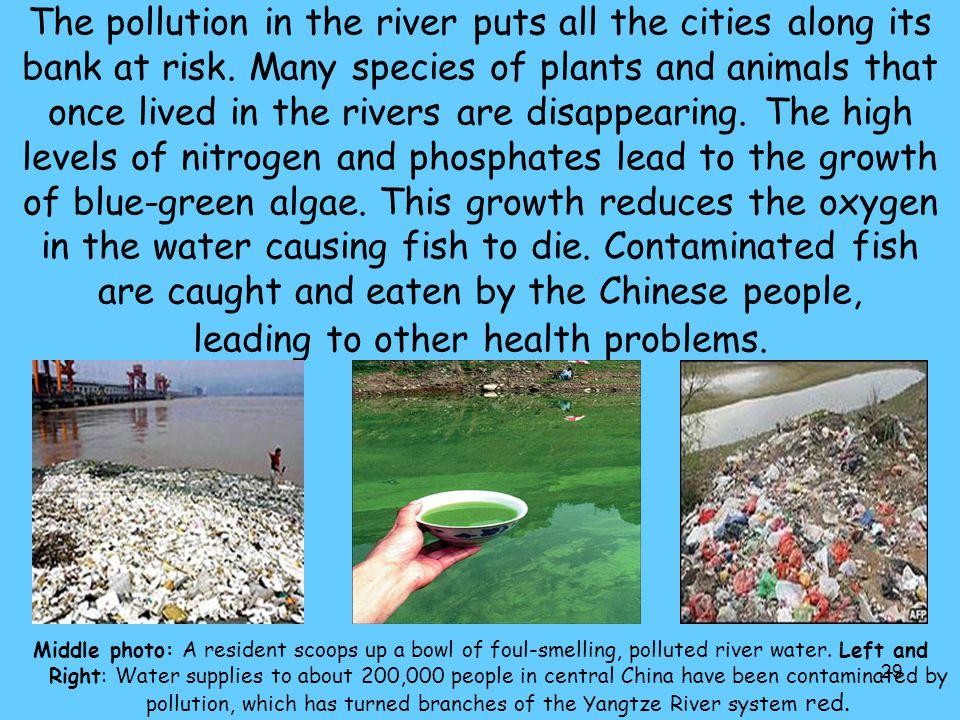 29 The pollution in the river puts all the cities along its bank at risk. Many species of plants and animals that once lived in the rivers are disappe