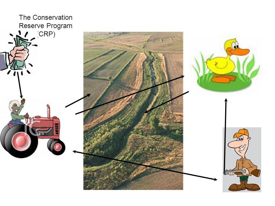 The Conservation Reserve Program (CRP)