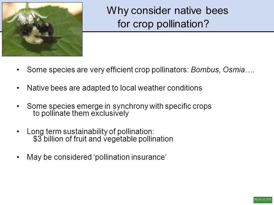 Some species are very efficient crop pollinators: Bombus, Osmia….