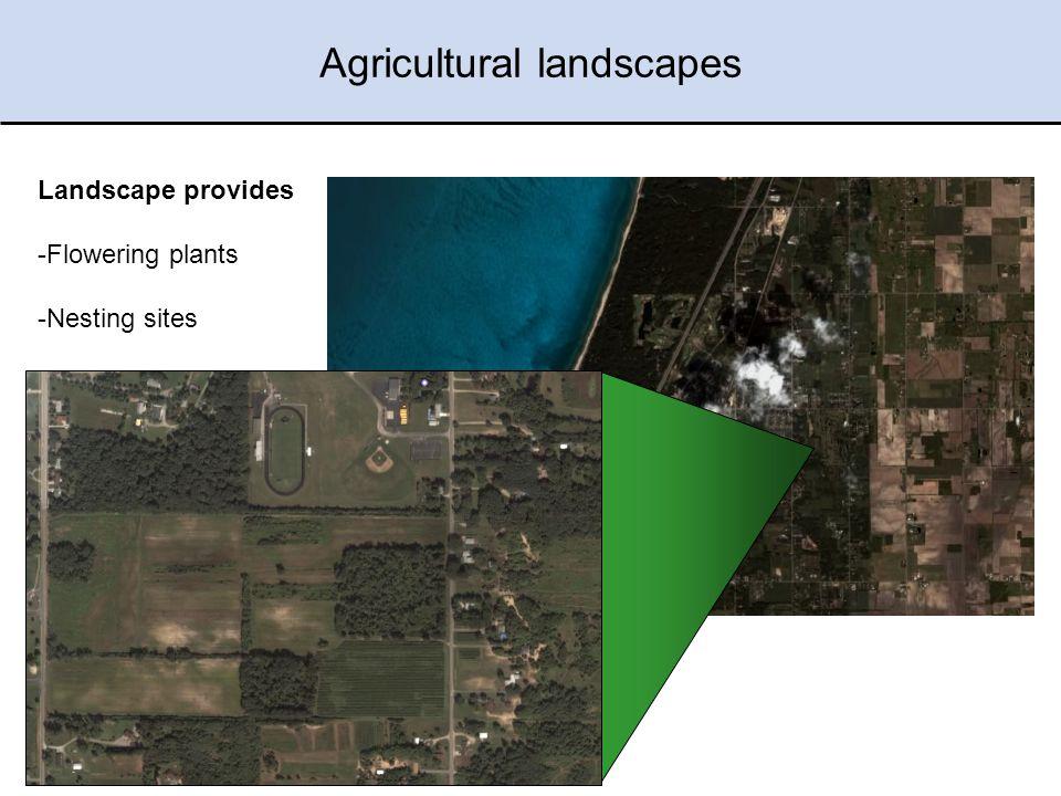 Michigan Agricultural Landscapes Agricultural landscapes Landscape provides -Flowering plants -Nesting sites