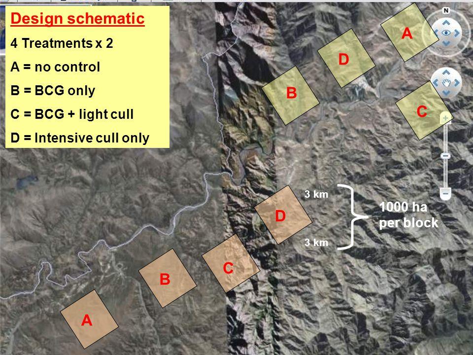 A B A D C C B D Design schematic 4 Treatments x 2 A = no control B = BCG only C = BCG + light cull D = Intensive cull only 3 km 1000 ha per block