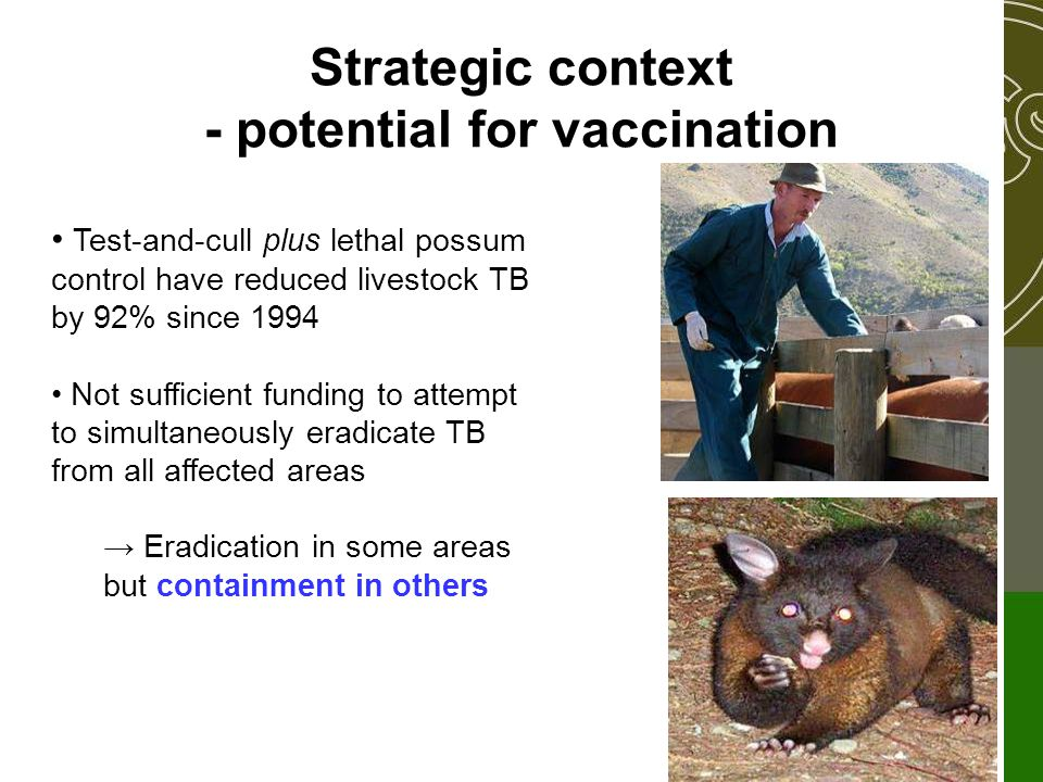 Strategic context - potential for vaccination Test-and-cull plus lethal possum control have reduced livestock TB by 92% since 1994 Not sufficient funding to attempt to simultaneously eradicate TB from all affected areas → Eradication in some areas but containment in others