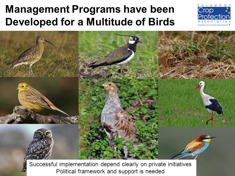 14 Management Programs have been Developed for a Multitude of Birds Successful implementation depend clearly on private initiatives Political framework and support is needed