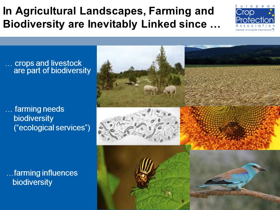 18 In Agricultural Landscapes, Farming and Biodiversity are Inevitably Linked since … … crops and livestock are part of biodiversity … farming needs biodiversity ( ecological services ) …farming influences biodiversity