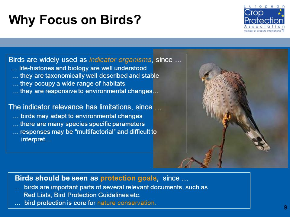 10 Trends of Farmland Bird Populations in Europe - Species with Declining Numbers Skylark (Alauda arvensis) Grey partridge (Perdix perdix) Lapwing (Vanellus vanellus) Source: European Bird Census Council (EBCC)