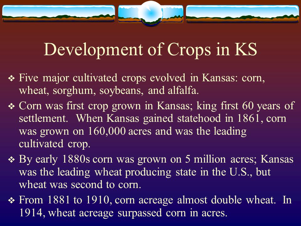 Development of Crops in KS  Five major cultivated crops evolved in Kansas: corn, wheat, sorghum, soybeans, and alfalfa.