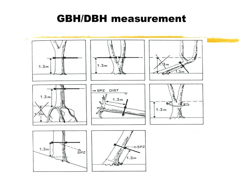 GBH/DBH measurement