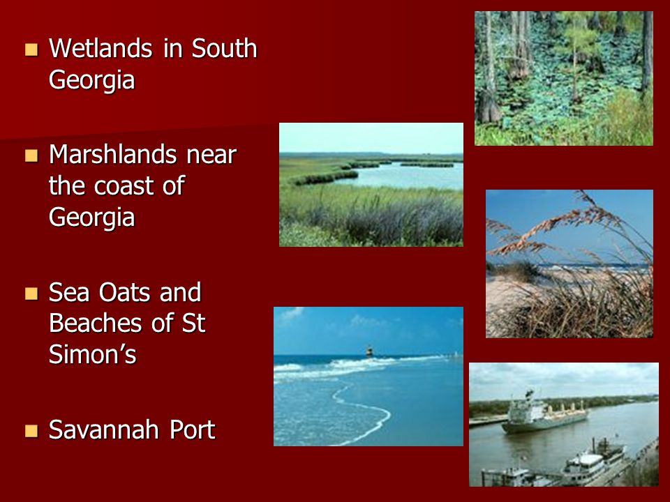 Wetlands in South Georgia Wetlands in South Georgia Marshlands near the coast of Georgia Marshlands near the coast of Georgia Sea Oats and Beaches of
