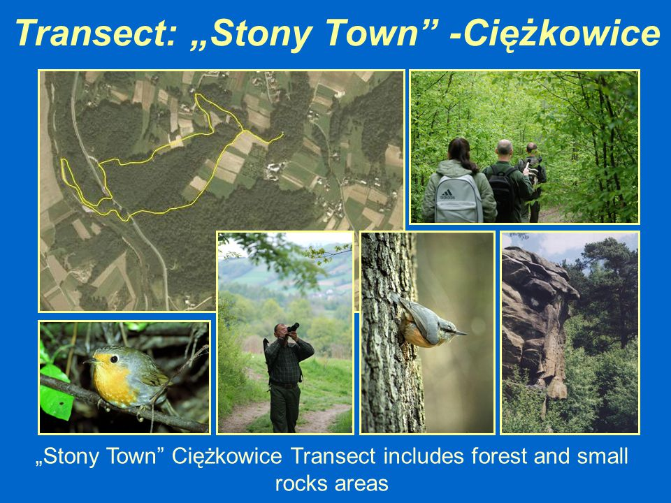 "Transect: ""Stony Town"" -Ciężkowice ""Stony Town"" Ciężkowice Transect includes forest and small rocks areas"