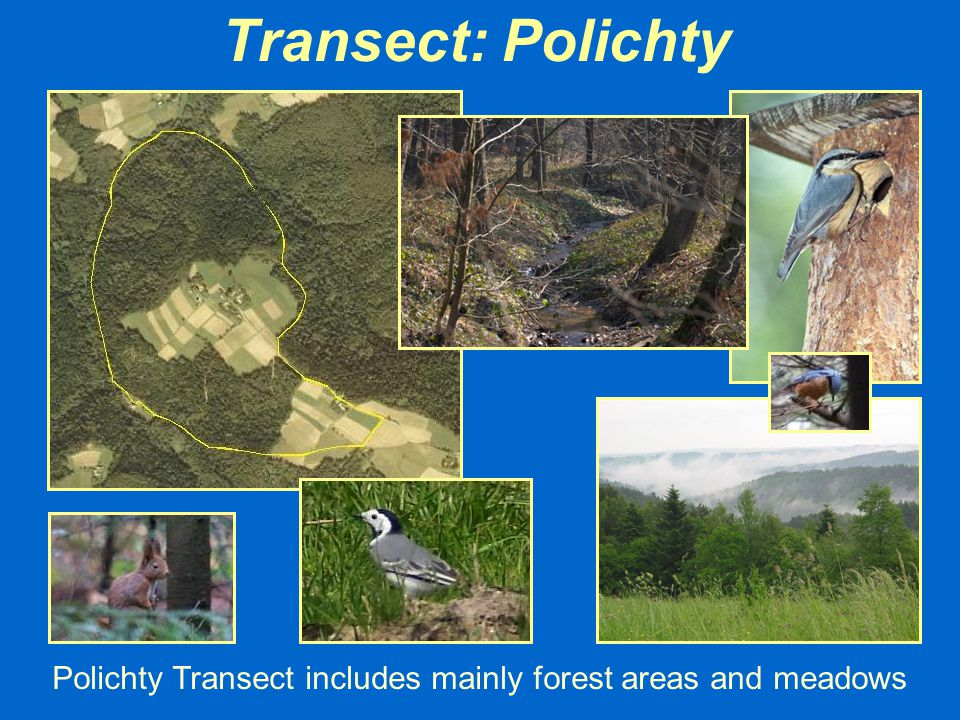 Transect: Polichty Polichty Transect includes mainly forest areas and meadows