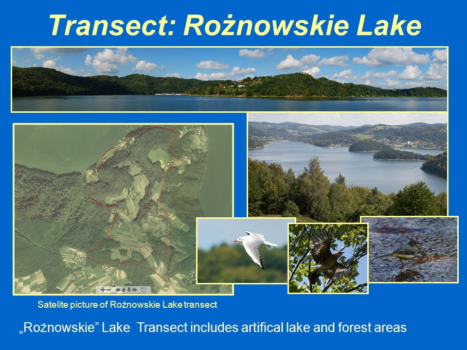 "Transect: Rożnowskie Lake ""Rożnowskie"" Lake Transect includes artifical lake and forest areas Satelite picture of Rożnowskie Lake transect"