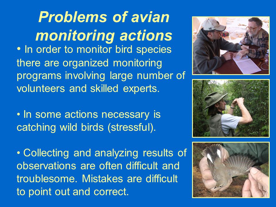 Bird Voice Recognizer – Unsupervised Mode Return Bird Voice Recognizer is a computer program capable to recognize bird species automatically using formerly recorded voice of the recognized bird species.