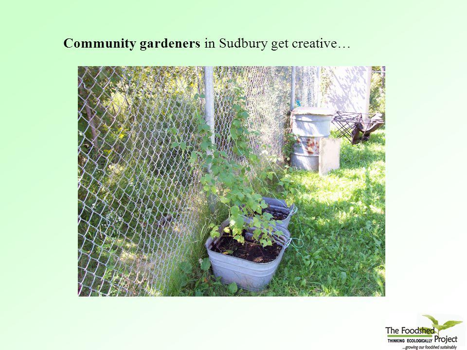 Community gardeners in Sudbury get creative…