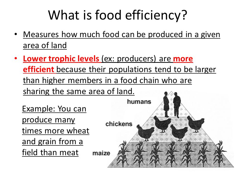 What is food efficiency.