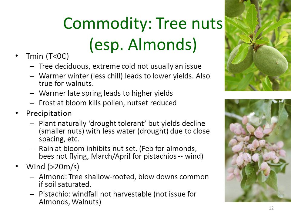 Commodity: Tree nuts (esp.