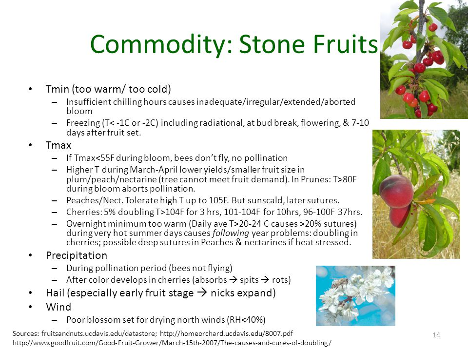 Commodity: Stone Fruits Tmin (too warm/ too cold) – Insufficient chilling hours causes inadequate/irregular/extended/aborted bloom – Freezing (T< -1C or -2C) including radiational, at bud break, flowering, & 7-10 days after fruit set.