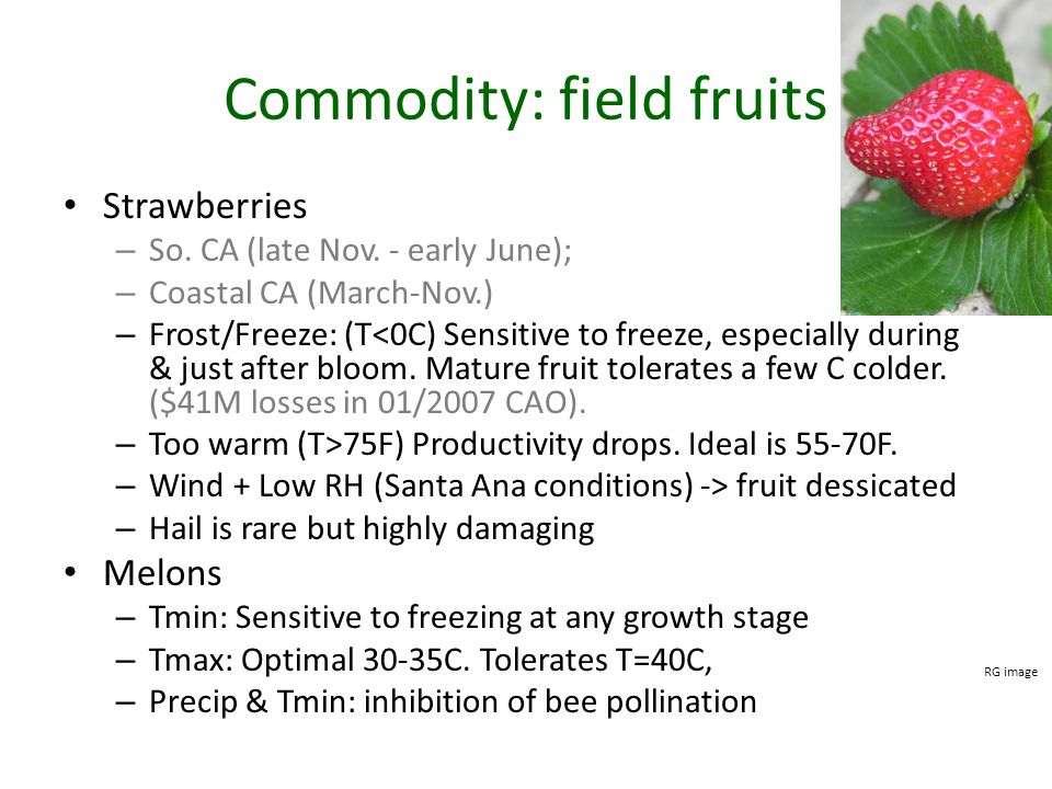 Commodity: field fruits Strawberries – So.CA (late Nov.