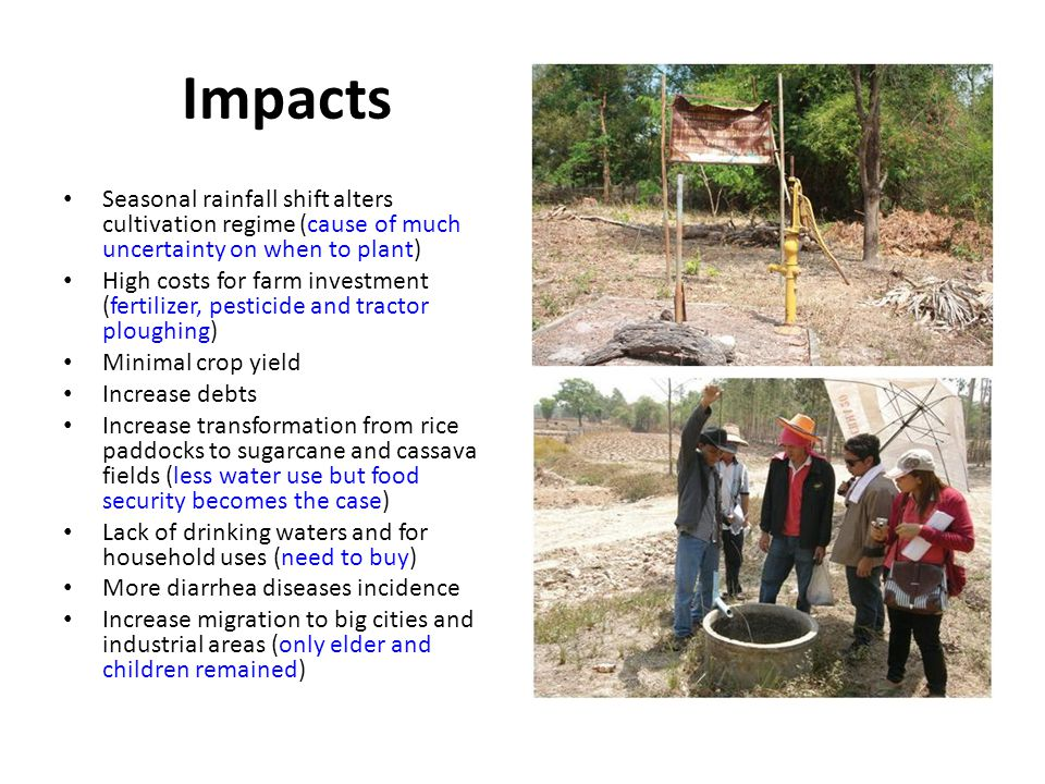 Impacts Seasonal rainfall shift alters cultivation regime (cause of much uncertainty on when to plant) High costs for farm investment (fertilizer, pesticide and tractor ploughing) Minimal crop yield Increase debts Increase transformation from rice paddocks to sugarcane and cassava fields (less water use but food security becomes the case) Lack of drinking waters and for household uses (need to buy) More diarrhea diseases incidence Increase migration to big cities and industrial areas (only elder and children remained)