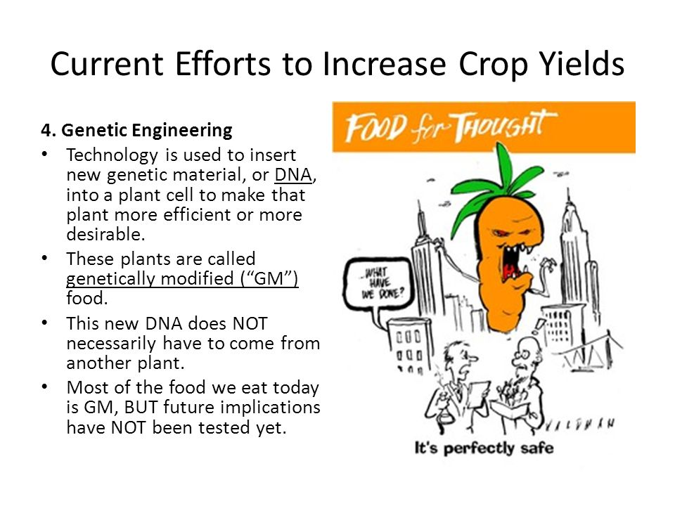 Current Efforts to Increase Crop Yields 4. Genetic Engineering Technology is used to insert new genetic material, or DNA, into a plant cell to make th