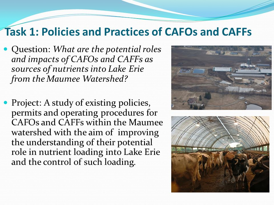 Task 1: Policies and Practices of CAFOs and CAFFs Question: What are the potential roles and impacts of CAFOs and CAFFs as sources of nutrients into Lake Erie from the Maumee Watershed.