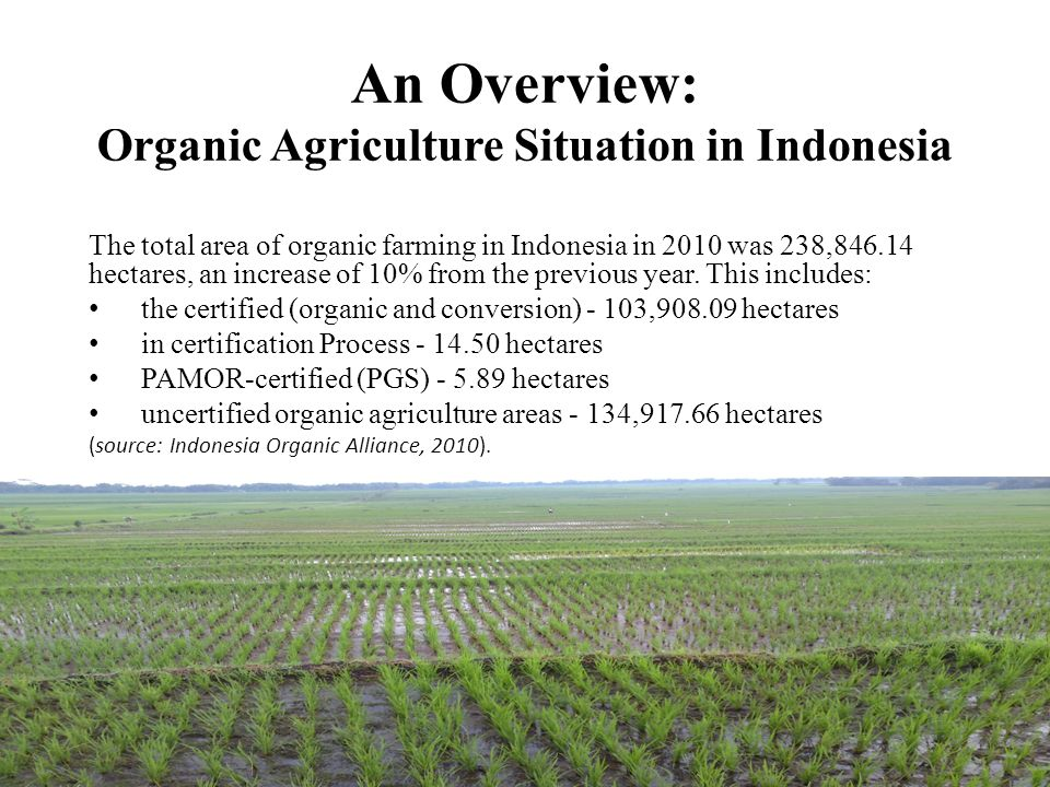 An Overview: Organic Agriculture Situation in Indonesia The total area of organic farming in Indonesia in 2010 was 238,846.14 hectares, an increase of 10% from the previous year.